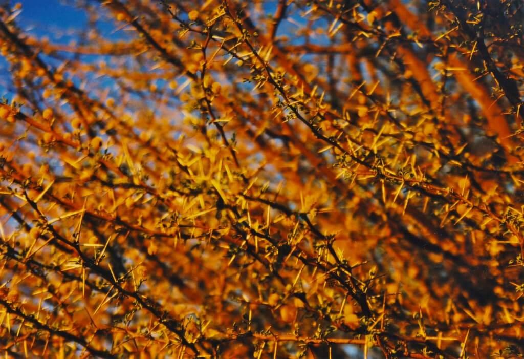 arbre_desert_niger