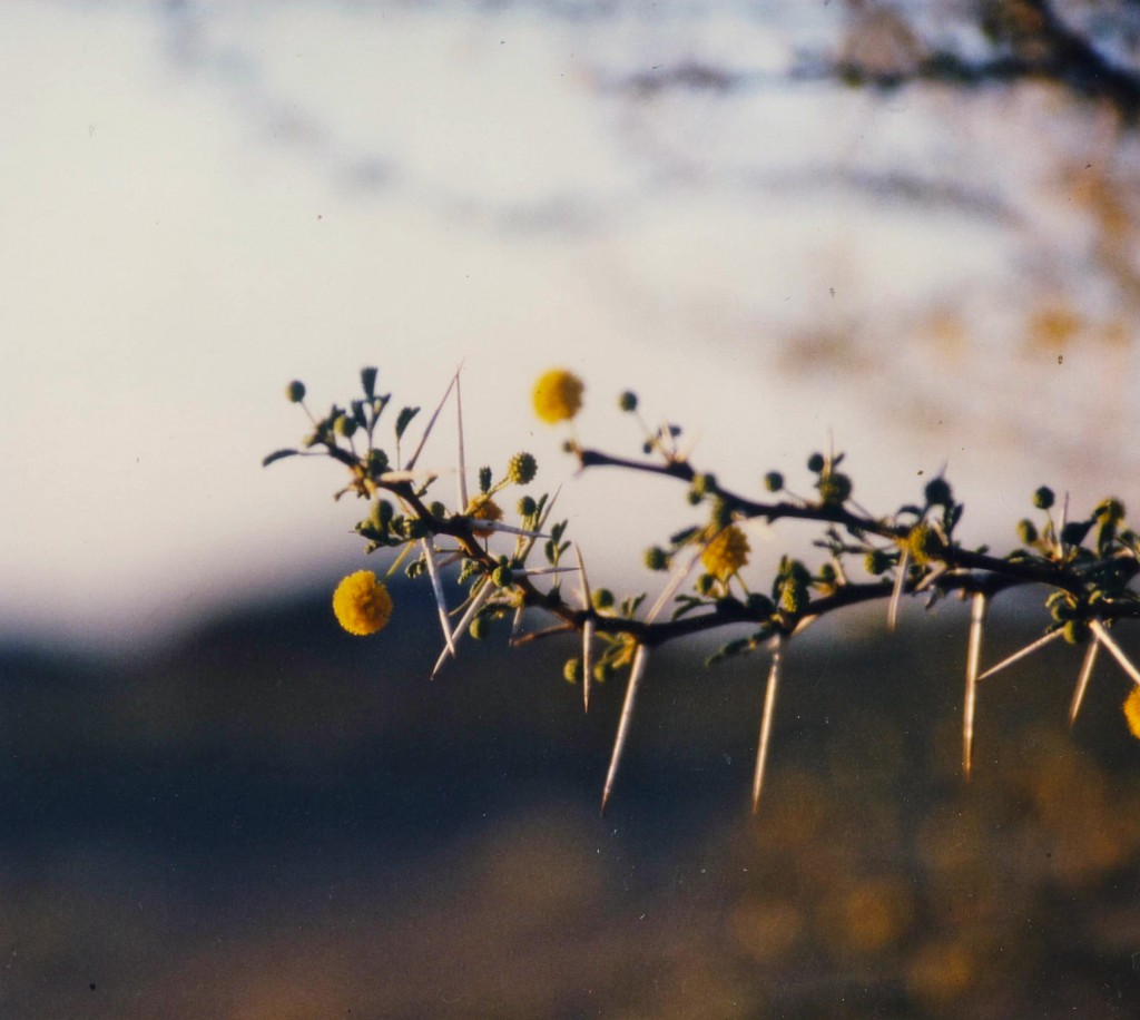 arbre_desert_niger2
