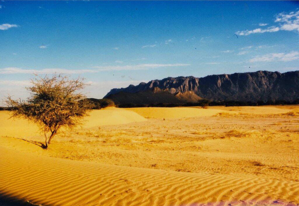 arbre_desert_niger3